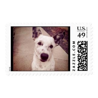 Puppy Postage