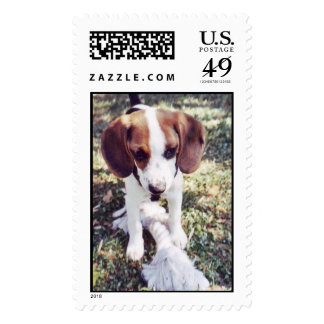 Puppy Postage Stamps