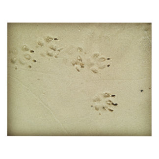 Puppy prints in the sand