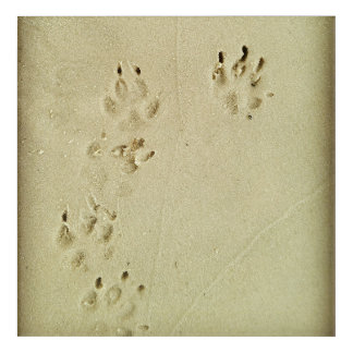 Puppy prints in the sand acrylic wall art