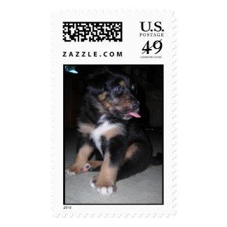 Puppy raspberry postage