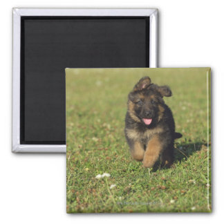 Puppy Running 2 Inch Square Magnet