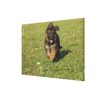 Puppy Running Canvas Print