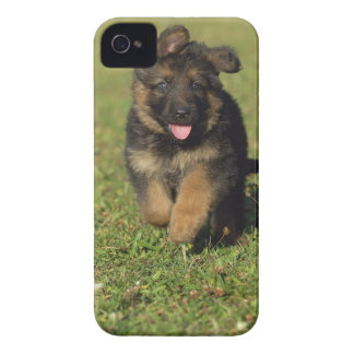 Puppy Running iPhone 4 Case-Mate Case