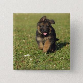 Puppy Running Pinback Button