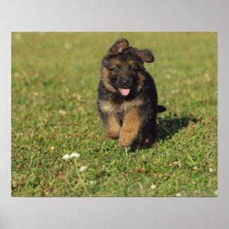 Puppy Running Poster