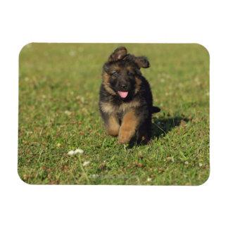 Puppy Running Rectangular Photo Magnet