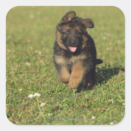 Puppy Running Sticker
