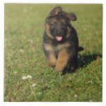 Puppy Running Tile