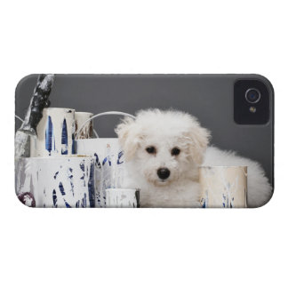 Puppy sitting amongst paint tins Case-Mate iPhone 4 case