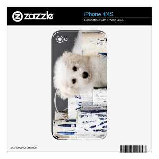 Puppy sitting amongst paint tins iPhone 4 skins