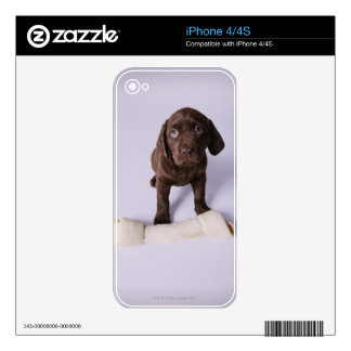 Puppy Sitting by a Bone iPhone 4 Decal