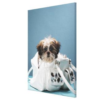 Puppy sitting in handbag canvas print