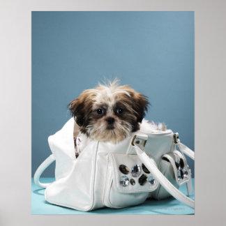 Puppy sitting in handbag poster