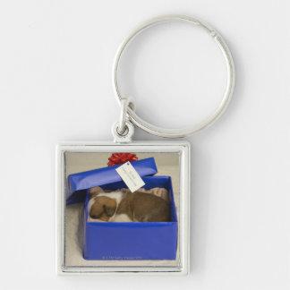 Puppy sleeping in a gift box keychain