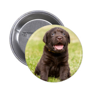 Puppy soft dog button