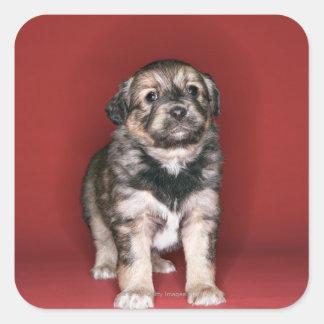 Puppy Square Sticker