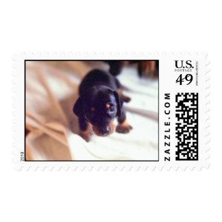 puppy stamp 4