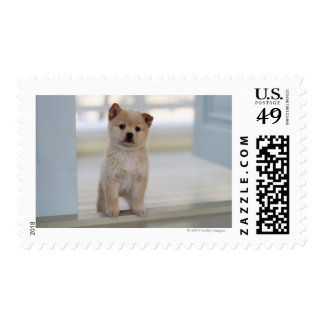 Puppy standing in a doorway postage