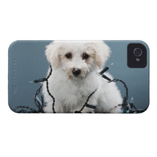 Puppy tangled in Christmas lights iPhone 4 Cover