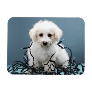 Puppy tangled in Christmas lights Magnet
