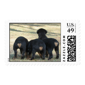 Puppy times three stamp