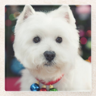 Puppy wearing Christmas bell on neck Glass Coaster