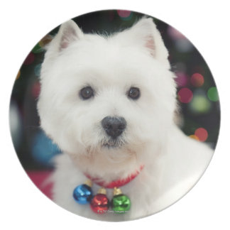Puppy wearing Christmas bell on neck Party Plate