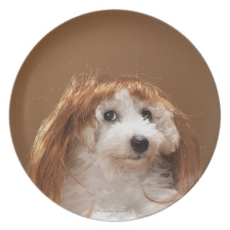 Puppy wearing ginger wig plate