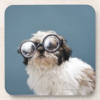 Puppy wearing thick glasses beverage coaster