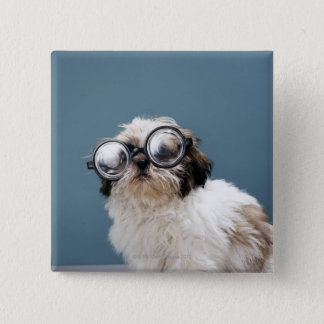Puppy wearing thick glasses button
