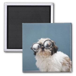 Puppy wearing thick glasses magnet