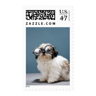 Puppy wearing thick glasses postage