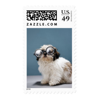 Puppy wearing thick glasses stamp