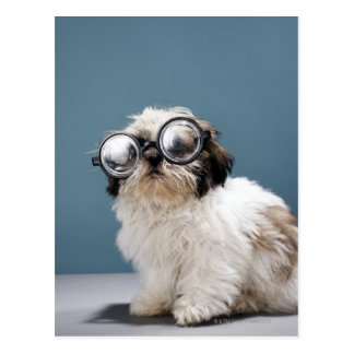 Puppy wearing thick glasses postcard