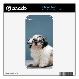 Puppy wearing thick glasses skin for iPhone 4S