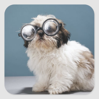 Puppy wearing thick glasses square sticker