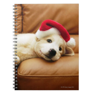 Puppy wears a christmas hat and lying on sofa notebook