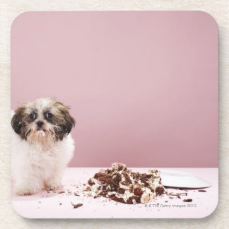 Puppy with cake on floor coaster