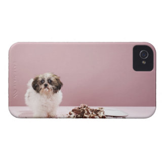 Puppy with cake on floor iPhone 4 case