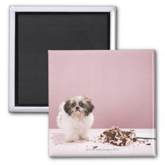 Puppy with cake on floor magnet