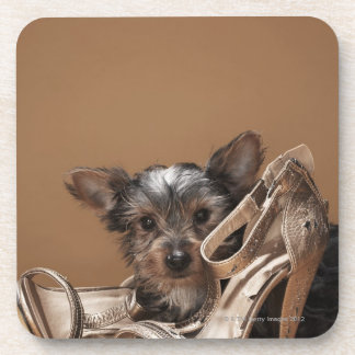 Puppy with damaged shoe coaster