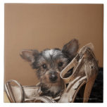 Puppy with damaged shoe tiles