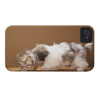 Puppy with head in cookie jar iPhone 4 case