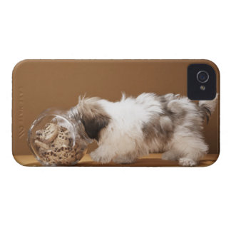 Puppy with head in cookie jar iPhone 4 cover