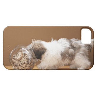 Puppy with head in cookie jar iPhone SE/5/5s case