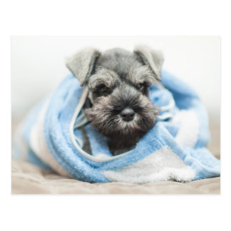 Puppy wraps with towel. postcard