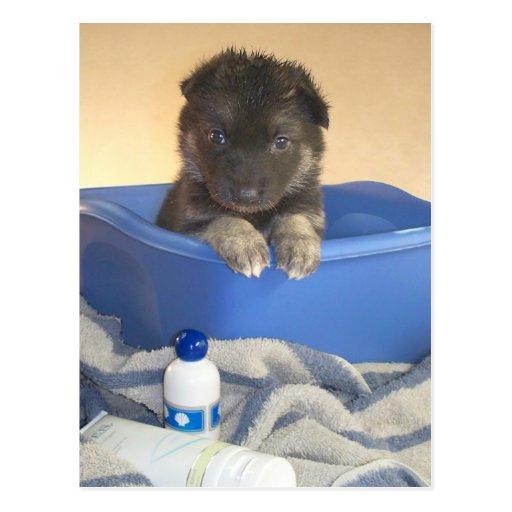 Puppy's Bath Time Campaign Postcard