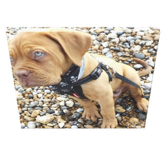 Puppy's day out at Whitstable Canvas Print