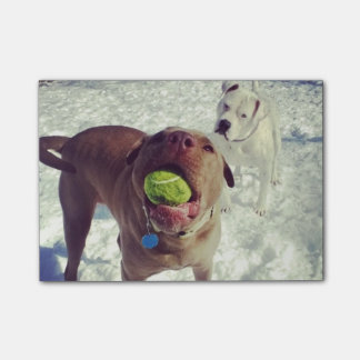 Pups playing Ball Note Pad Post-it® Notes